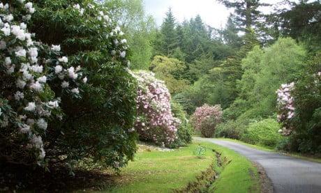 Ardanaiseig Rose Cottage Driveway