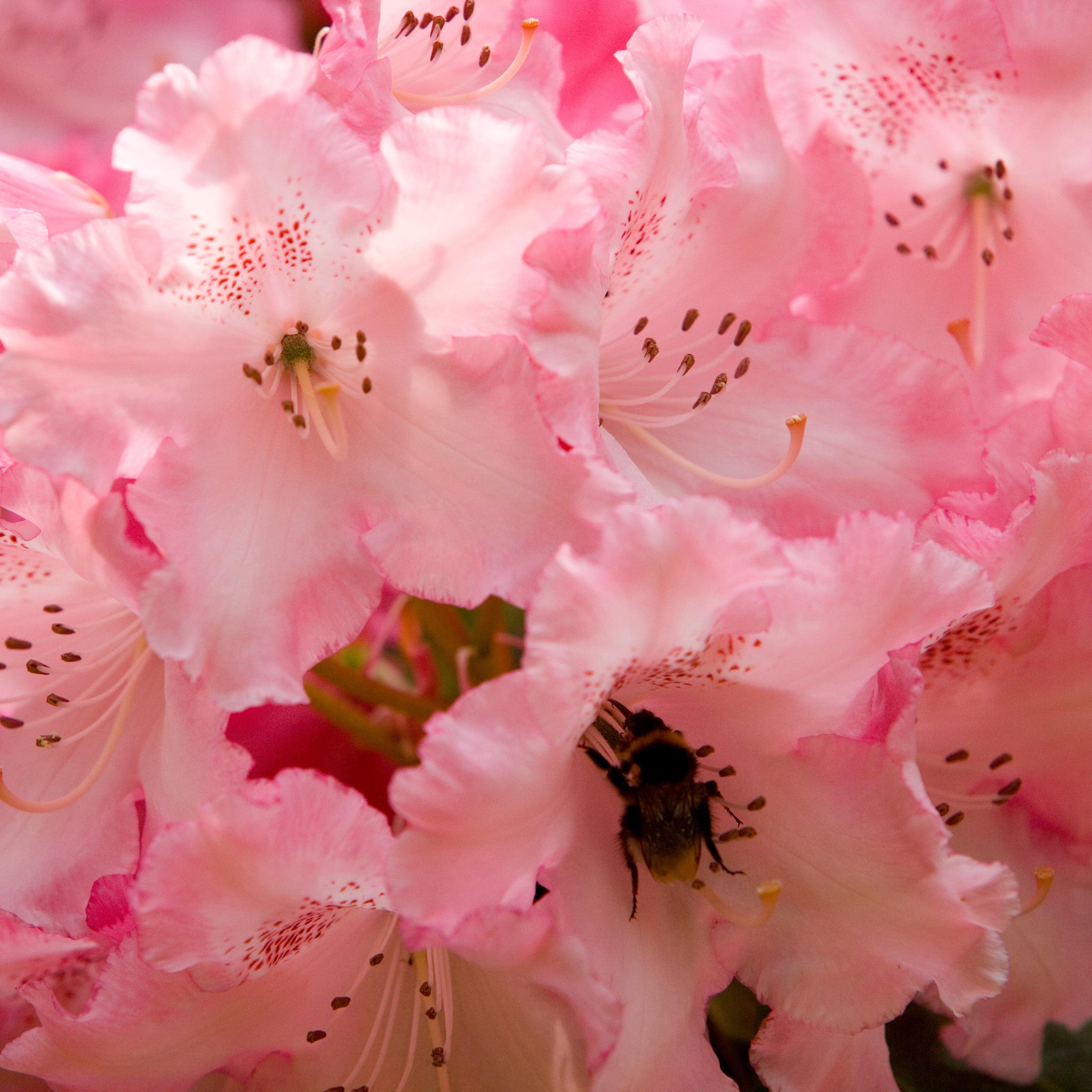Ardanaiseig - Flowers (Square)