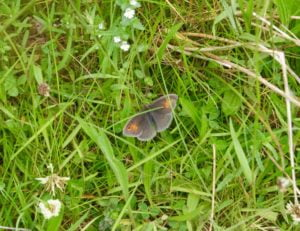 Highlands Wildlife: Butterfly