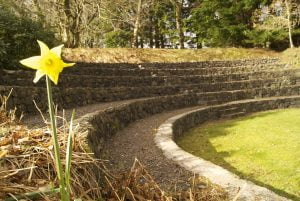 Daffodils in the amphitheatre at Ardanaiseig
